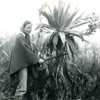 Langenheim on research expedition in Colombia