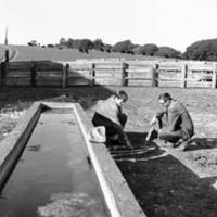 Carl Morris, professor of statistics, and Ronald Larsen, professor of mathematics, by a water trough. 1966.