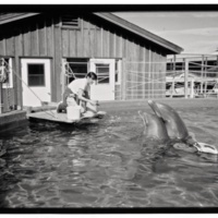 Dolphin trainer Michelle Jeffries Wells