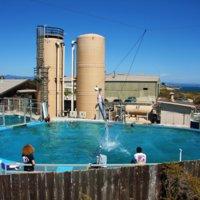 Dolphin, Seymour Marine Discovery Center, 2009