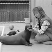 Long Marine Laboratory. Evelyn Hanggi training a sea lion. 1989.