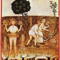 Theatrum Sanitatis Miniatures