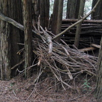 Tree fort/sculpture